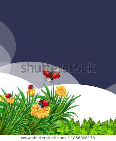 シーン てんとう虫 庭園 花 日 ストックフォト © bluering