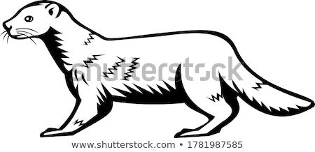 European Mink Russian Mink or Eurasian Mink Retro Black and White  Stock photo © patrimonio