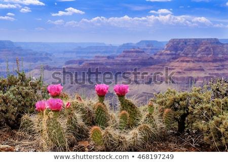flowers on canyon rim Stock photo © pancaketom