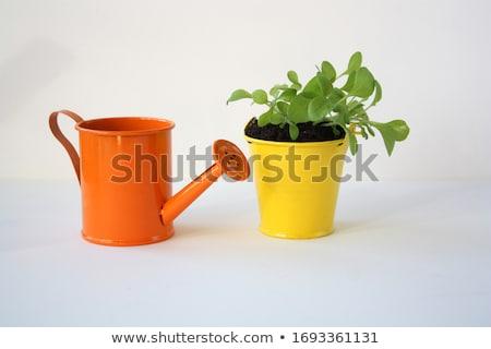 Zaailingen plant wortel bodem geïsoleerd witte Stockfoto © lalito