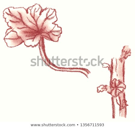 sanguine geranium leaf Stock photo © smithore