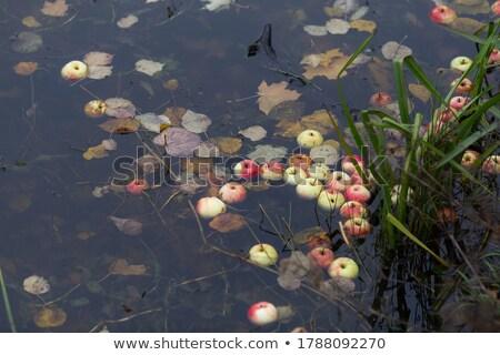 vallen · bladeren · vijver · openbare · park - stockfoto © davidgn