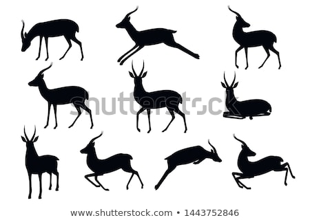 The set of the silhouettes of the gazelle Stock photo © perysty