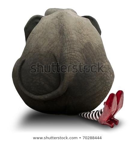 слон хвост ногу азиатских грязный почвы Сток-фото © smithore