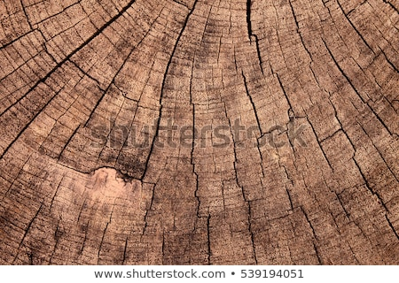 Tree Stump Texture Stock photo © winterling