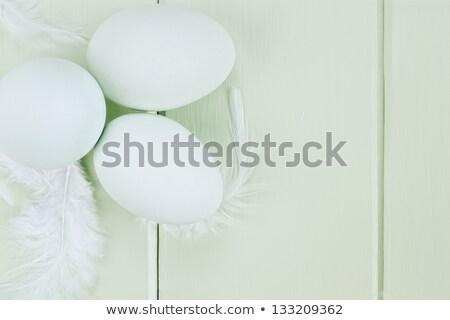 fresh ameraucana eggs and feathers stock photo © stephaniefrey