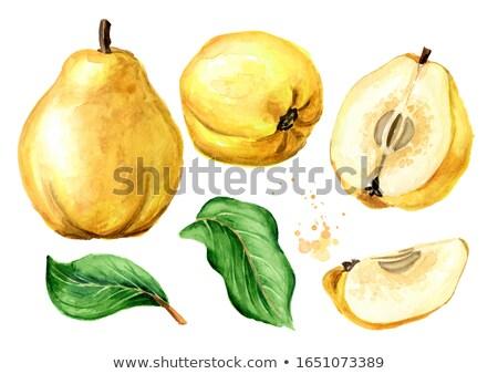 желтый плодов айва стороны грязные фермер Сток-фото © vavlt