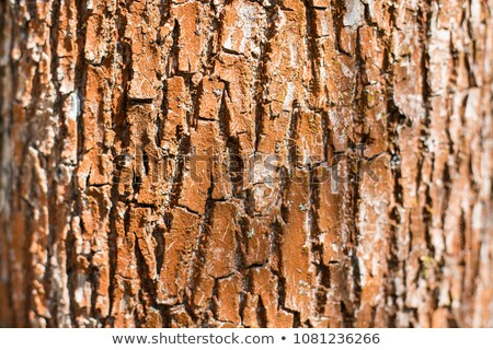 Bark texture background pattern crack old brown for design Stock photo © nemar974