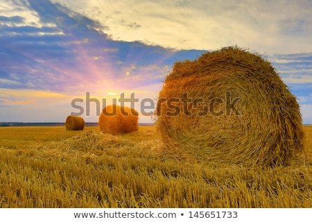 Round Hay Bales against Beautiful Sky Stock photo © tainasohlman