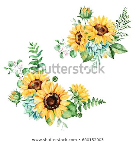 Sunflower frame Stock photo © varts