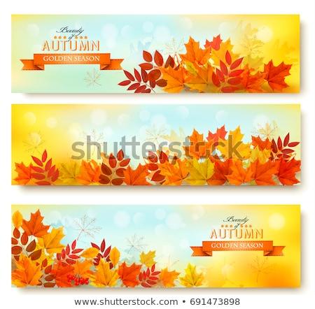 Photo stock: Trois · automne · bannières · modèle · design