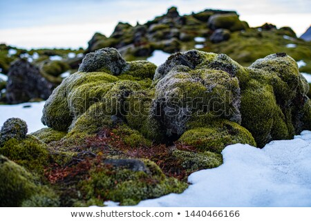 lava fields with moss covered lava rocks Stock photo © 1Tomm