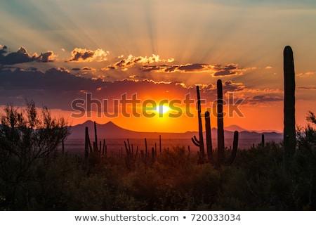 Gün batımı çöl tepeler Tunus gökyüzü güneş Stok fotoğraf © eleaner