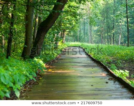 Maneira floresta árvore grama estrada verde Foto stock © PetrMalyshev