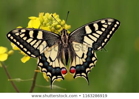 Fiore farfalla ritratto parco animale bella Foto d'archivio © t3rmiit