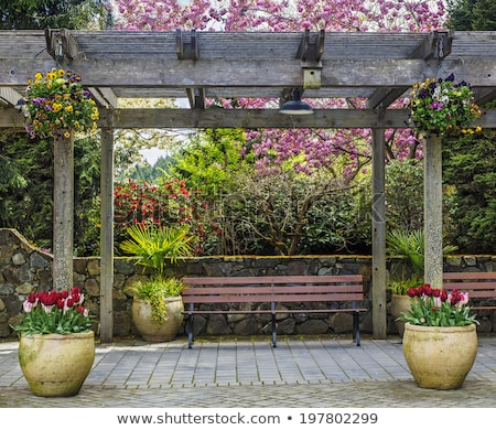 rustic pergolas with benches under blossoming trees stock photo © art9858
