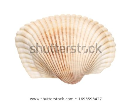 Sea shell series stock photo © ShawnHempel
