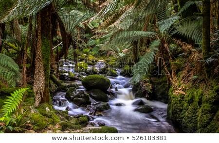 リモート 熱帯雨林 タスマニア州 カラフル ストレート ストックフォト © roboriginal