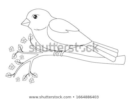 Sparrow, Color Illustration Stock photo © Morphart