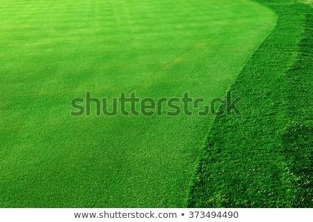 golf · verde · prato · erba · verde · campo · da · golf · campo · di · calcio - foto d'archivio © scenery1