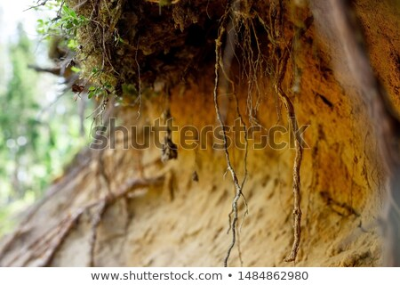 a cliff with trees stock photo © bluering