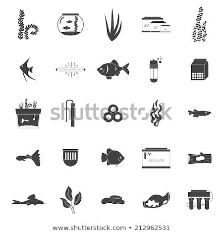 水族館 白 水 スタジオ タンク 計 ストックフォト © cynoclub