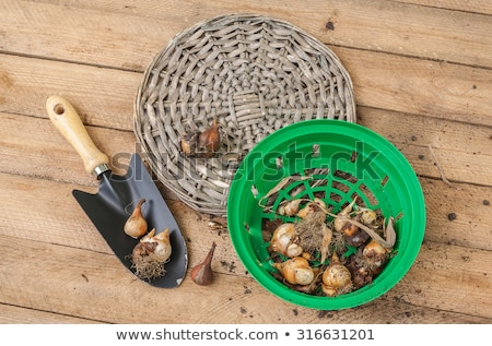 Harvest time. A basket of vegetables on a wooden table foto stock © Yatsenko