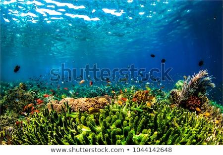 Blue marine color background Stock photo © vapi
