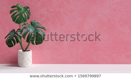Pink Houseplant Stock photo © devon