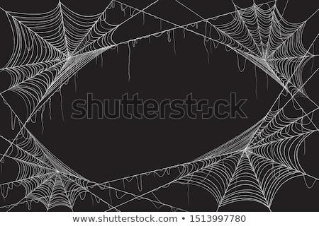Preto teia de aranha branco natureza teia silhueta Foto stock © orensila