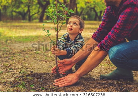 Father and son up on a tree Stock photo © IS2
