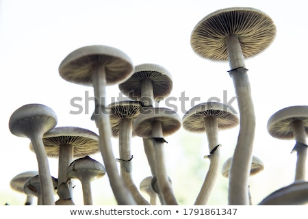 Psychedelic champignon giftig illustratie schedels logo Stockfoto © lenm
