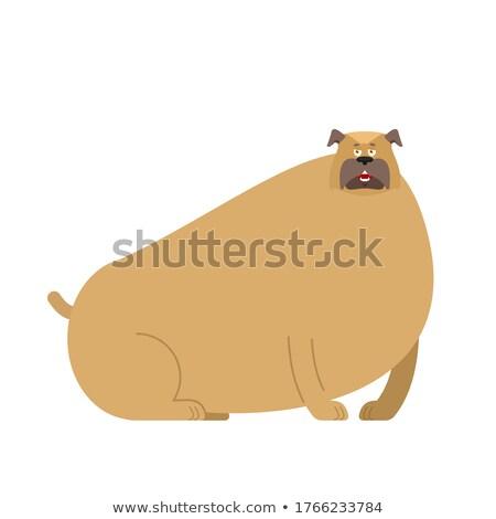 Kövér kutya bulldog otthon díszállat háttér Stock fotó © popaukropa