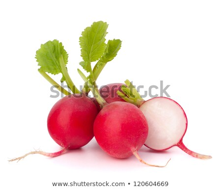 Small garden radish isolated on white background cutout Stock photo © ungpaoman