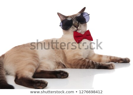 Gentleman kat zonnebril kant witte Stockfoto © feedough