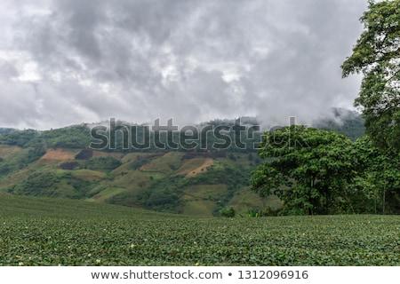 баннер удивительный пейзаж мнение чай плантация Сток-фото © galitskaya