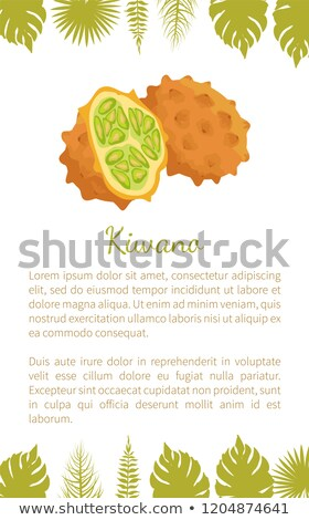 primer · plano · ilustración · frescos · vegetales · aislado · alimentos - foto stock © robuart