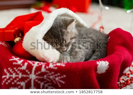 red cat lying in bed with christmas gift at home Stock photo © dolgachov