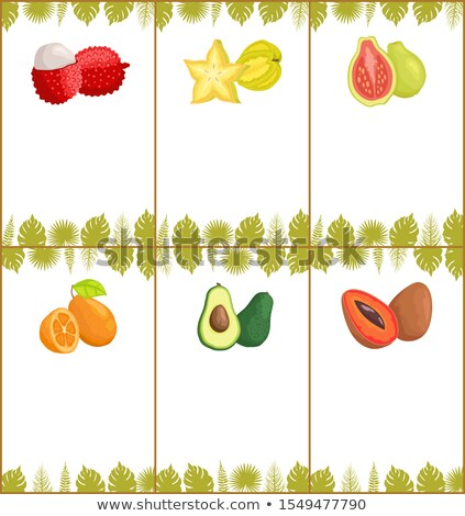 Avocat vecteur tropicales exotique fruits affiches Photo stock © robuart