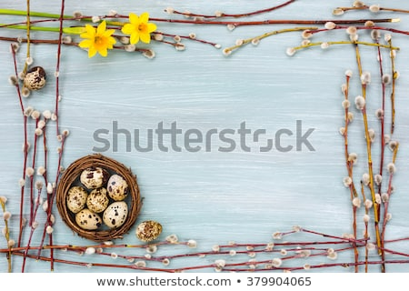 Stock photo: Quail  Easter eggs on grey background with willow branch.
