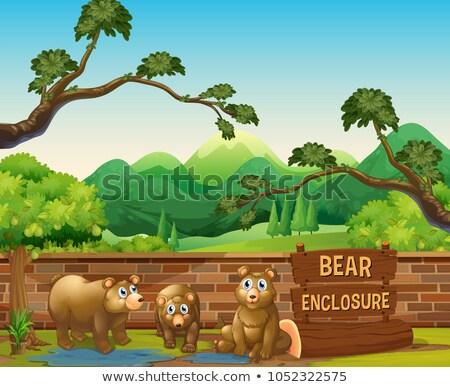 Three bears in the opened zoo Stock photo © colematt