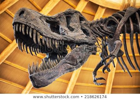 Dinossauro natureza ilustração sorrir feliz fundo Foto stock © colematt