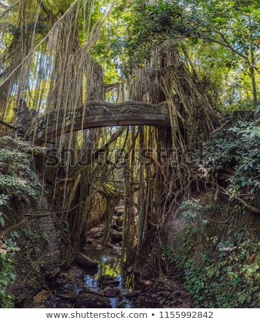 BIG panorama of Famous dragon bridge in Monkey Forest Sanctuary in Ubud, Bali, Indonesia. Stock photo © galitskaya