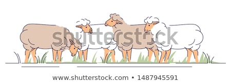 Sheep on Pasture, Animals Livestock Farming Vector Stock photo © robuart