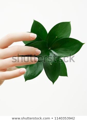 Soins de la peau belle mains manucure feuilles vertes Photo stock © serdechny