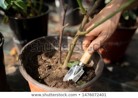 ogrodnik · łopata · szczęśliwy · mężczyzna · biały - zdjęcia stock © pressmaster