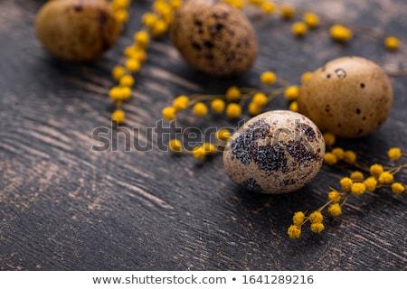 Quail eggs and mimosa flowers Stock photo © furmanphoto