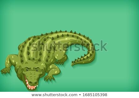 Sablon terv szín zöld krokodil illusztráció Stock fotó © bluering
