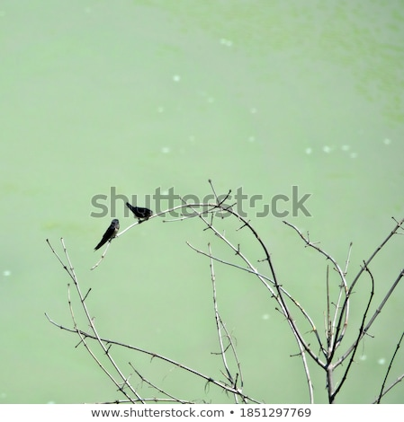Flying Birds Free Stock Photos Download 3 416 Free Stock: Flying Swallows Vector Illustration © Yura Mayboroda