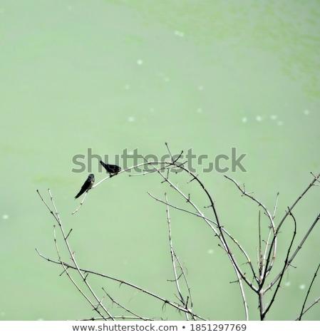 repülés · madár · kék · festmény - stock fotó © mayboro